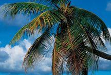 Martinique / Paradise : home