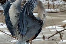 vtáctvo