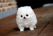 i have a soft spot for tiny doggies / by Ali Lewis