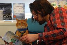 Libros de gatos, cuentos de gatos