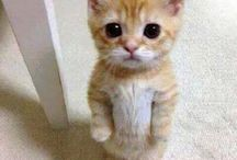 Animal Quotes / Cute, funny, whats not to like?