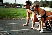 Dogs <3
