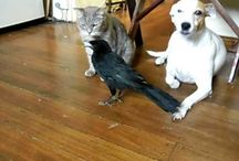 Животные - настроение, дружба2