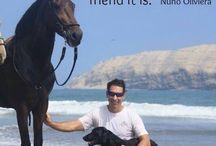 Horses sentences / Famous sentences about horses