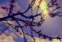 -photos-