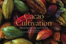 Cacao captured