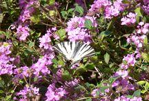 Butterfly / Mondo di lepidotteri