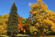 Podzim / fotografie podimních krás