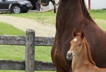 ANIMALS-HORSES / by TAMBRA FRANK