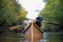 vivere al lago