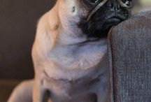 Sweet Pugness / by Andrea Askins