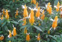 Perennial Pretties / Perennial Flowers