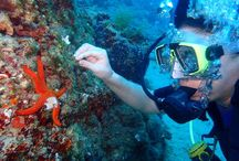 Bubble Adventures Halkidiki / Scuba Diving and Snorkeling in Halkidiki, Greece