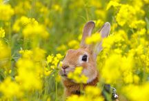 Happy Easter Bunny!