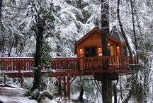 Bed & Breakfast Tree Houses!