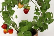 Sjove ideer til indendørs dyrkning af planter / Opbinding af planter fx jordbær