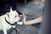 four legs / bulldogs, mostly / by Kristin White