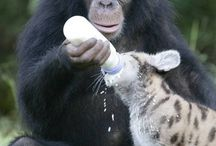 Furry Friends  / All things animals