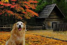 Autumnal Animals