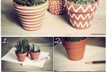 flowerpot, cactus, succulent
