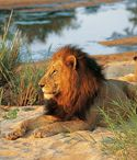 Luxury Travel to South Africa