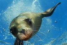 Seals / by Boo Jay