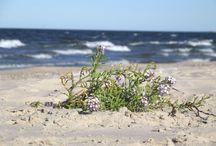 Bałtyk, Polska / Baltic Sea, Polish coastline