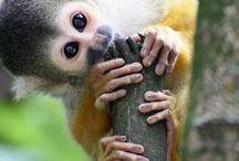 monkeys :) / i love monkeys so much :)
