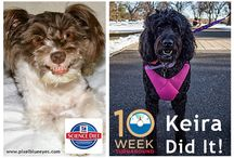 Pixel's Pet Care Tips & Advice / From travel to pet food to grooming...Pixel shares her best tidbits for success.