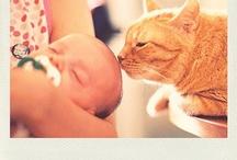 Animal Lovers Unite