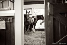 GET IN MY BARN : / by C L A U D I A