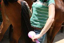 horses/ hue dada!!