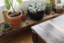 living room × plants