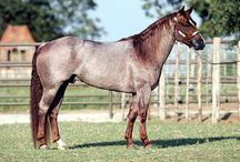 Hoof prints & Horseshoes / All things equestrian.