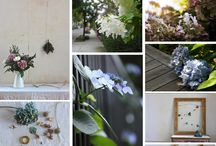 best of Hydrangeas / Favourite hydrangea images