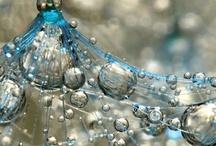 Bubbles /