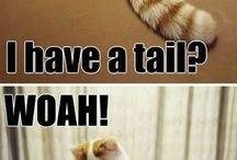 kočka s ocasem