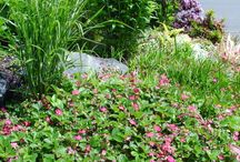 Slope Planting / Create the tapestry of your dreams with STEPABLE plants for small slopes and hills.