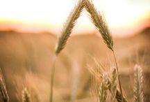 Sail through wheat