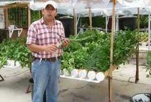 cultivo hdropónico y riego por goteo casero%&