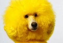 yellow .... tuesday