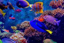 Sea Life / Sea Life, Beaches, Oceans, etc