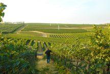 Winemaker Interviews