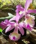 Adoro orquídeas.