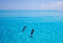 Travel / Bahamas