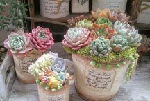 succulent plant & cactus