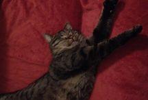 Bagera ✨ / Best cat ever!! ✨