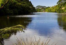 NZ landscape & bush paintings