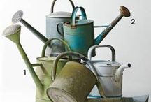 Watering Cans / by Monica Warford