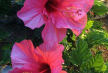 Tropical / Beautiful flowers and other sunny pictures / by Amy Cerney